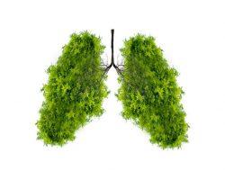 tree-like lungs